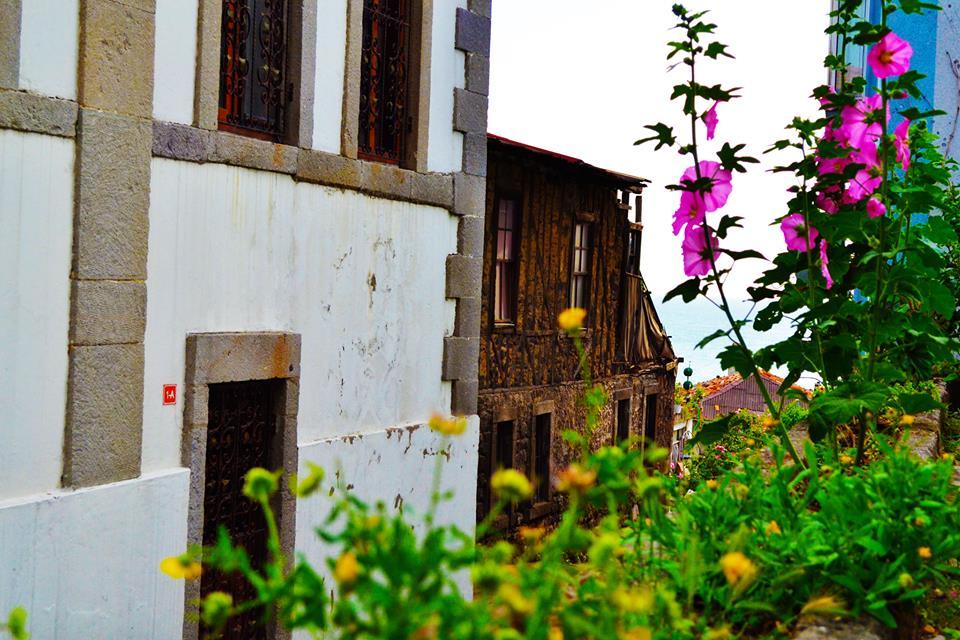 Pempe bir çiçeğin arkasındaki sarı çiçeklerden görünen eski ahşap Amasra evleri